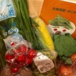 大地宅配|心も体も豊かになれるオーガニック無農薬有機野菜の食べるアンチエイジング