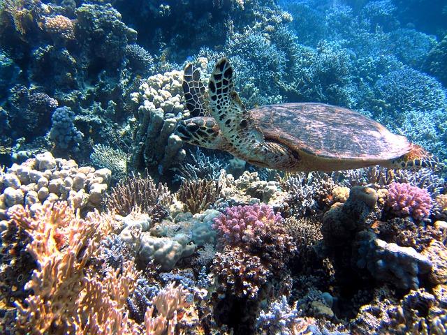 サンゴパウダー