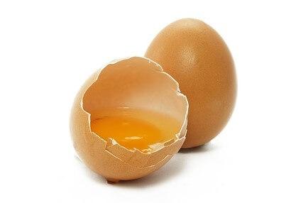 卵隔膜とは